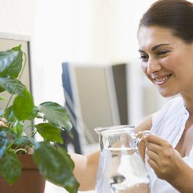 5 piante da coltivare in ufficio per aumentare la produttività