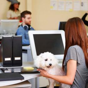 Regole da rispettare per portare animali in ufficio