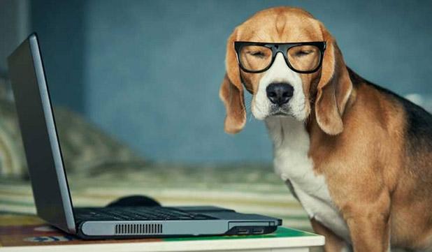 Portare il cane il ufficio
